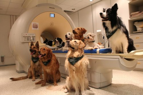 """Cum procesează creierul câinilor vorbirea umană? Specialiștii sunt uimiți: """"Este similar cu ce se întâmplă în cazul creierelor umane…"""""""