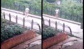 Momentul când un cățel fără stăpân a fost aruncă de pe un pod s-a viralizat INSTANT pe rețelele de socializare. Iubitorii de animale sunt uimiți
