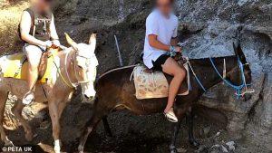 Situație HALUCINANTĂ în Grecia! Măgarii din Santorini, abuzați de stăpânii! / VIDEO Caz incredibil. Detalii-bombă