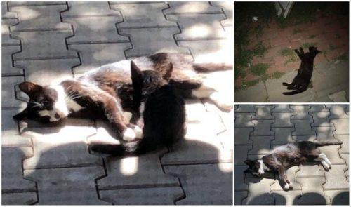 Pisicile dintr-un cartier cu pretenții MOR OTRĂVITE! Ce au făcut bietele ANIMALE?…