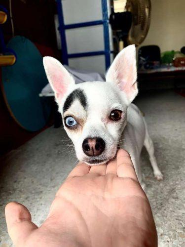 Oamenii nu cred că acest câine adorabil este REAL! Voi ce părere aveți? Lucky este real sau fals