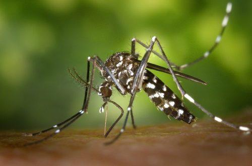 Mare atenție la înțepăturile de țânțari! A fost depistat primul CAZ de infecție cu virusul West Nile