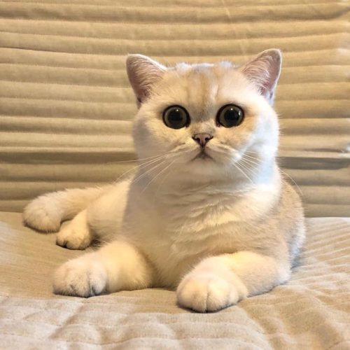 SofistiCAT, ceam mai mare pisicăreală din această toamnă a fost unică. Uite ce feline au fost în centrul atenției