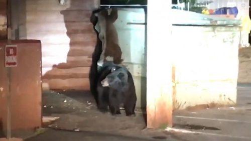 Un pui de urs a trecut prin aventura vieţii sale! Cum și cine l-a salvat pe bietul animal / VIDEO