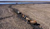 Terifiant! Animale blocate în apă în încercarea de a căuta un strop de apă, iar pescarii profită și…