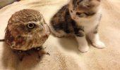 O bufniță și un pui de pisică, prieteni pe viață! Iubitorii de animale sunt uimiti