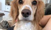 Wow! Un câine a fost confundat cu o vulpe. Ce a urmat este halucinant