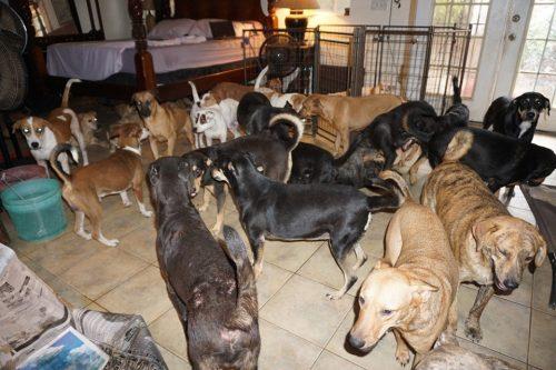 Gestul unei femei a uimit întreaga lume! Ce a făcut pentru a salva 100 de câini din calea uraganului Dorian