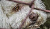 Tânărul care se ocupă de AsociațiaPhrosa's Sanctuary, mesaj special pentru toți iubitorii de animale