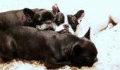 Cât de căutate sunt BONELE pentru animale în România? Afacerea a prins avânt