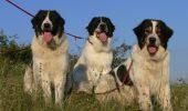"""SUPER TARE! Uite ce rasă de câine participă, în premieră,  la """"Dracula Dog Show"""""""