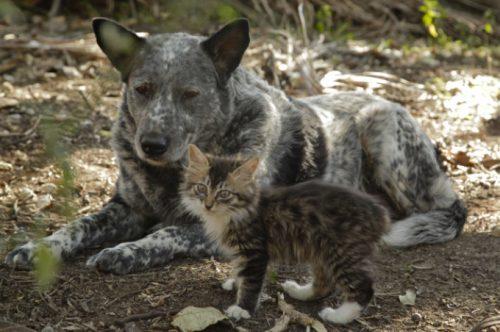 """Poveste inedită dintre un câine și un pisoi născut cu dizabilități! """"Are grija de el…"""" / VIDEO"""