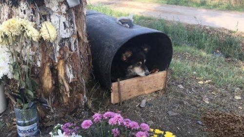 câinele de la copac