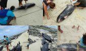 Halucinant! Tragedie fără margini. Experții sunt speriați și încearcă să descopere cum au murit sute de delfini