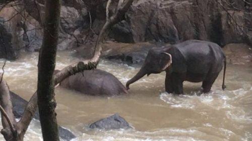 Înfiorător! Elefanți, înghițiți de o cascadă în timp ce încercau să se salveze / VIDEO
