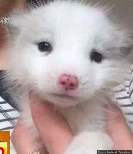 """Incredibil!  O femeie a plătit 400 de dolari pe un """"câine"""", însă a înlemnit de spaimă când a aflat ce crescuse"""