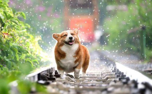 Apare prima platformă online unde se pot comercializa LEGAL animalele de companie