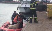 Operatiune de salvare a celor peste 14.000 de oi, de pe nava care a lovit un banc de nisip