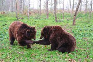 Decizii de ultimă oră referitoare la gestionarea cazurilor legate de animale sălbatice