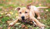 Cum se PEDEPSEȘTE în România tratamentul cu cruzime sau tortura animalelor