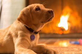 Câine - Incendii