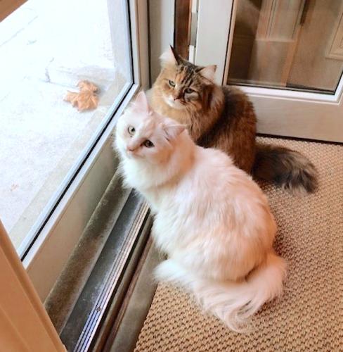 O vedetă a DEZVĂLUIT modul NEOBIȘNUIT de a-și plimba pisicile