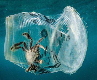 Vie'uitoare marine - plastic