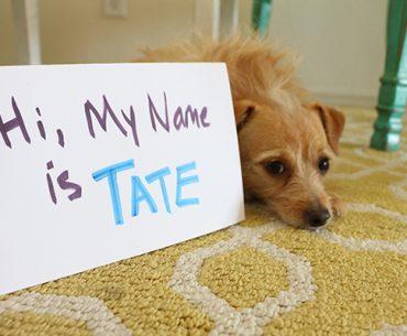 15 sfaturi nume câine