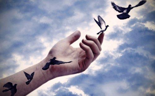 Păsările trec prin transformări INIMAGINABILE. Cine e de vină și ce se întâmplă?