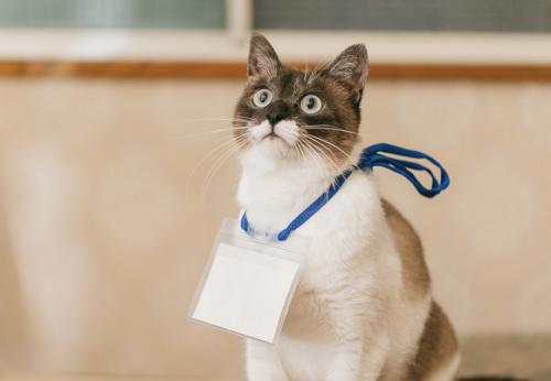 Sfaturi UTILE pentru alegerea numelui pisicii