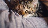 Cât de mult îți prelungește viața o pisică.
