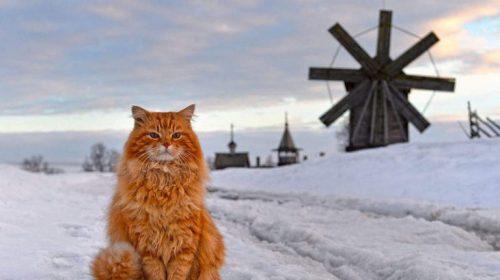 Ce fac pisicile din Moscova, iarna