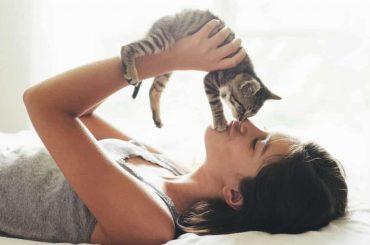 Pisicile sunt veninoase?