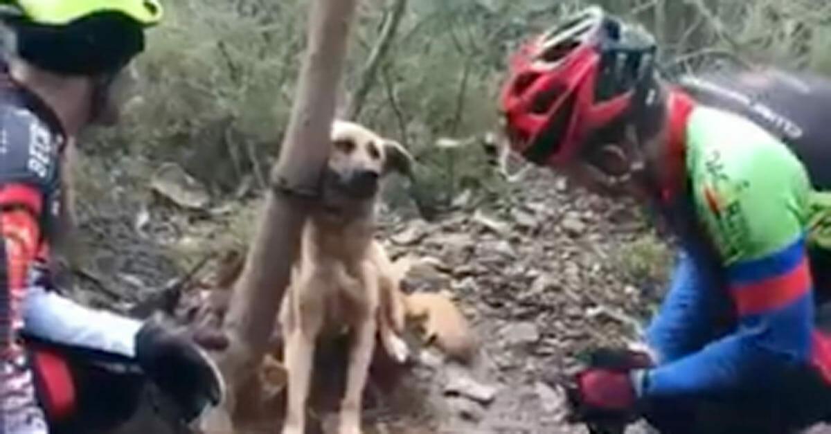 Reacția emoționantă a unui câine legat în pădure și lăsat să moară, atunci când este găsit de salvatori!