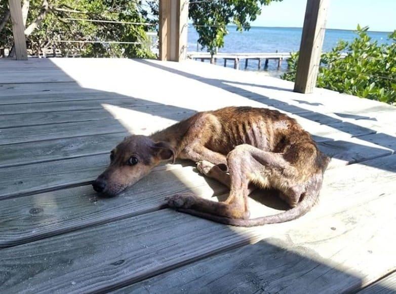 Câine abandonat