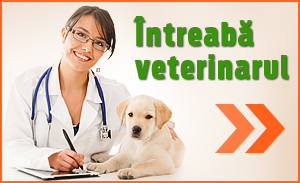 Intreaba veterinarul - AnimalZoo.ro